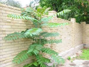 забор из двух видов кирпича